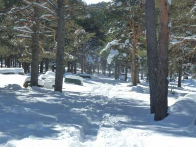 Ladera Mojonavalle-Bosques Canencia; cañadas reales viajes a la palma tienda montaña madrid